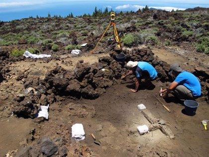 Retoman las campañas arqueológicas en el Teide para estudiar la ocupación humana de Las Cañadas