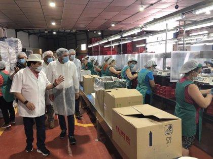 La campaña de uva de mesa alcanzará las 140.000 toneladas y superará las cifras de exportación del pasado año