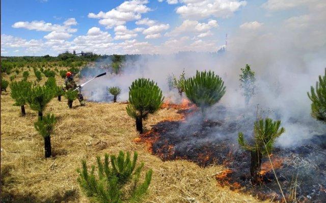 Incendio en el 'Bosque de los sueños' en Valladolid.
