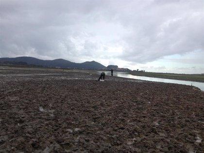 Cantabria levanta la veda para la extracción de moluscos bivalvos