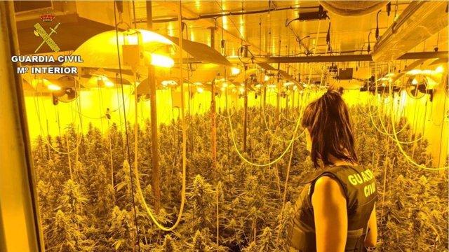 Almería.- Sucesos.- Detenido con un cultivo de 295 plantas de marihuana en una vivienda de Matagorda