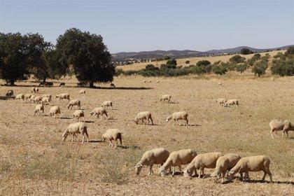 UPA-UCE presenta a la Junta más de 80 propuestas en materia agrícola para la reactivación económica de Extremadura