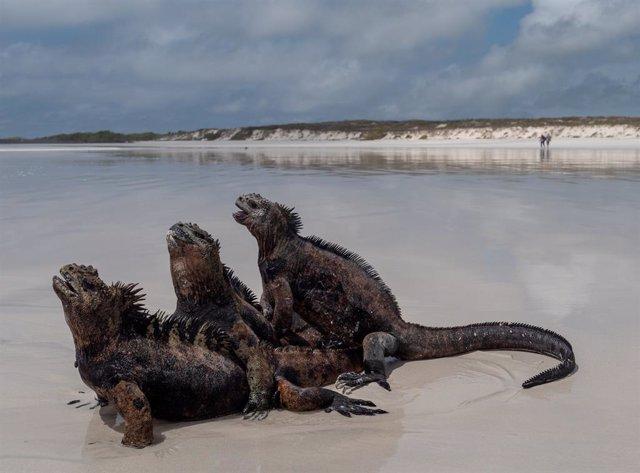 Coronavirus.- Galápagos reabre sus zonas protegidas al turismo tras cuatro meses
