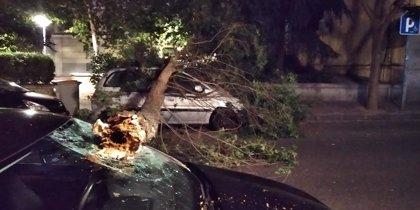 Cae un árbol de grandes dimensiones sobre varios vehículos en una calle de Arganzuela