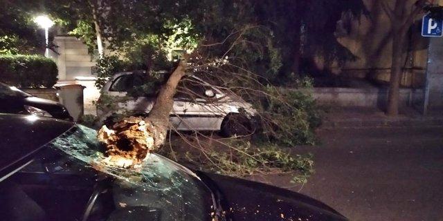 Imagen de la rama de un árbol de grandes dimensiones que ha caído en la calle Canarias, en el distrito de Arganzuela.