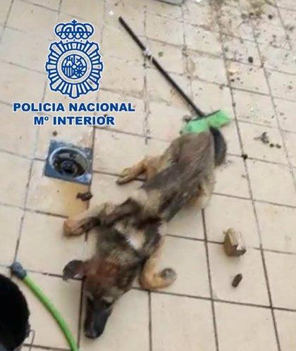 A prisión un joven de El Ejido (Almería) acusado de arrojar un perro vivo a una jauría malnutrida para alimentarla