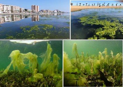 El IEO concluye que el primer paso para recuperar el Mar Menor es impedir la llegada de nutrientes y sedimentos