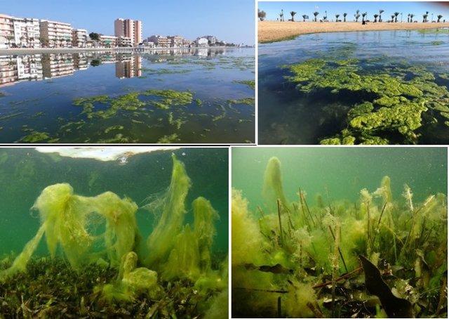 El estudio del IEO encargdo por el MITECO concluye que es necesario eliminar los aportes de nutrientes al Mar Menor (Murcia) como primer paso para lograr su recuperación.