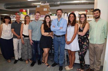 Fundación Vithas y la Universidad Francisco de Vitoria crean un laboratorio de investigación en tumores cerebrales