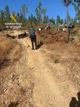 La Guardia Civil busca a un hombre desaparecido en la Sierra de Jola