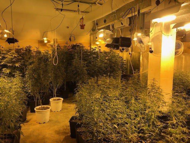 Plantación de marihuana en el barrio del Carmel de Barcelona