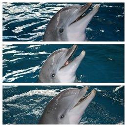 Els tres últims dofins del Zoo de Barcelona ja s'han traslladat a Atenes (Grècia)