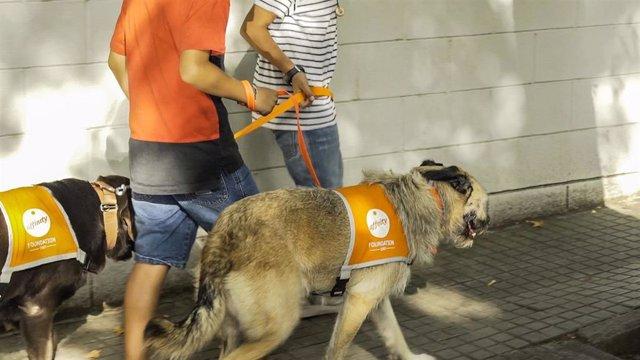 Perros de terapia de la Fundación Affinity ayudan a niños tutelados a superar los efectos negativos del confinamiento