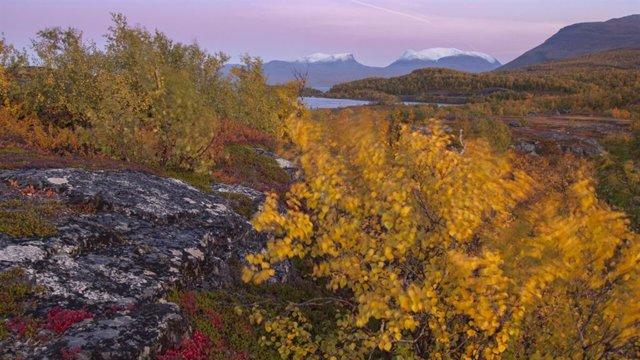 Las raíces de las plantas aumentan la emisión de carbono del permafrost