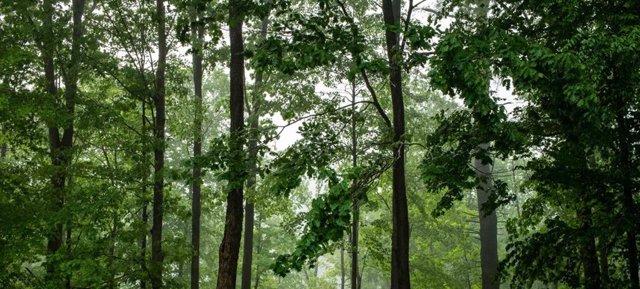 Clima.- El mundo ha perdido 178 millones de hectáreas de bosque desde 1990, segú