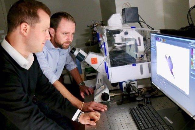Daniel Slade, izquierda, y Scott Verbridge, derecha, investigan cómo la mala higiene bucal podría hacer que las bacterias migren a otras partes del cuerpo donde existen cánceres.