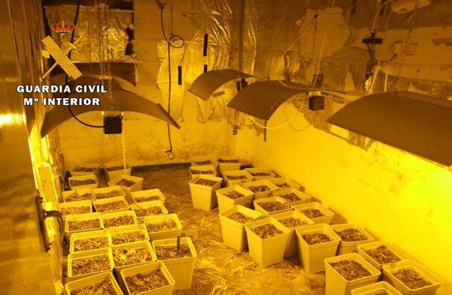 """La Guardia Civil desmantela una plantación """"indoor"""" de cannabis sativa ubicada en una vivienda de Almansa."""