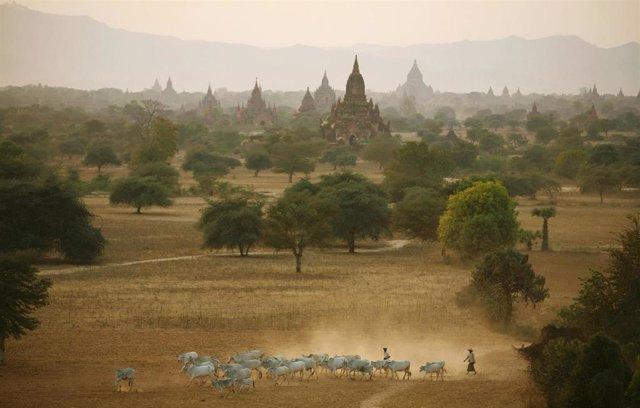 Pagodas en Bagan (Birmania)