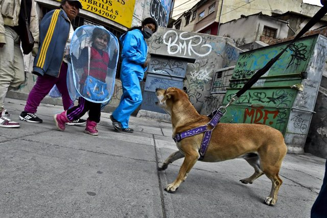 01 June 2020, Bolivia, La Paz: People walk past a person walking his dog on the street after the relaxation of restrictions that were imposed to curb the spreading of coronavirus. Photo: Christian Lombardi/ZUMA Wire/dpa