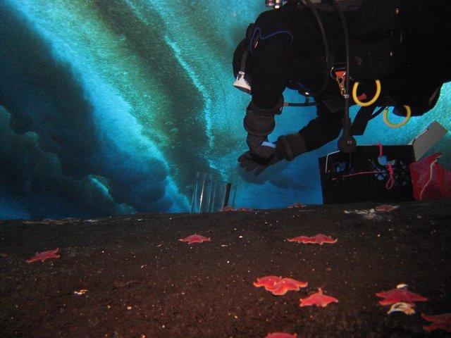 Un científico explora las áreas poco profundas de la Antártida en busca de esteras microbianas