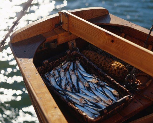 Economía.- Carrefour se alía con el sector pesquero de Cádiz para comprar boquerón mediano