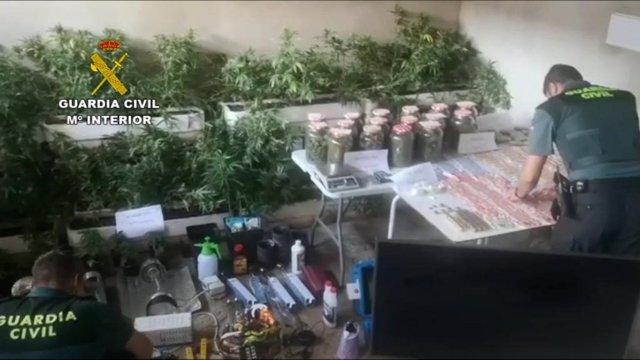 Plantación Indoor de marihuana en una vivienda de Moguer.