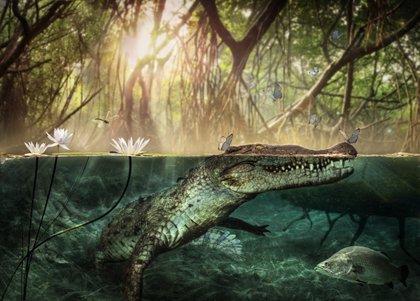 Descubierto en Libia el antepasado de los cocodrilos americanos