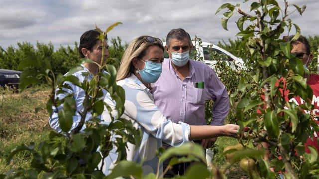 """La consejera de Agricultura, Ganadería, Mundo Rural, Territorio y Población, Eva Hita, anuncia que el Gobierno regional """"hará las pruebas PCR al cien por cien de los trabajadores temporales con contrato y sin contrato""""."""