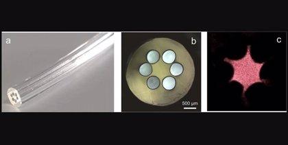 Una fibra óptica biocompatible derivada de las algas
