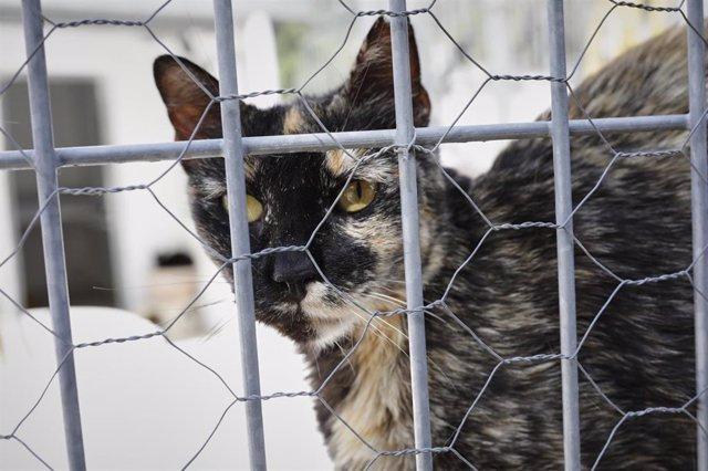 Un gato observa por la verja de las instalaciones adecuadas del albergue San Francisco de Asis de la Sociedad Protectora de Animales y Plantas de Madrid (SPAP). En Fuencarral-El Pardo, Madrid, (España), a 2 de junio de 2020.