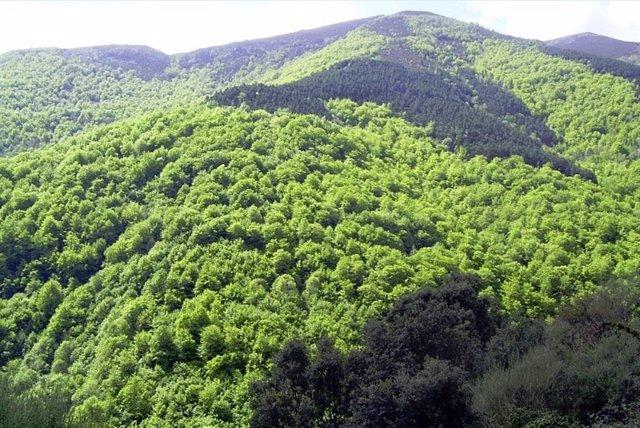 Los bosques riojanos almacenan 12,2 millones de toneladas de carbono en sus 176.