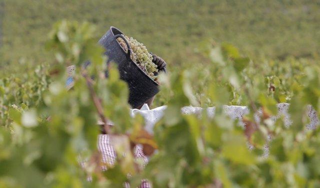 La Junta elabora una guía para prevenir el Covid-19 en las explotaciones agrarias con temporeros