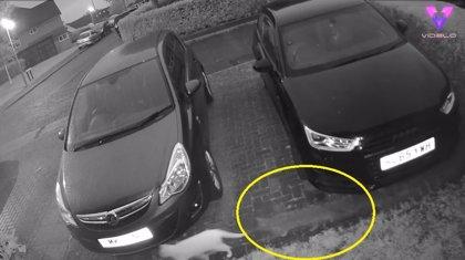 Una cámara de seguridad filma al fantasma de un gato persiguiendo a su amigo felino