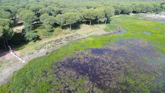 Doñana en una imagen de archivo
