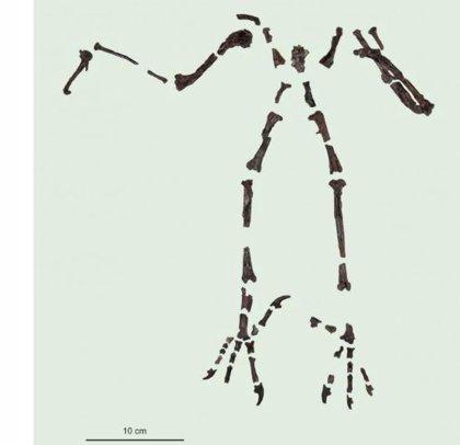 Un gran buho mataba mamíferos con sus garras hace 55 millones de años