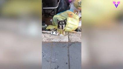 Un perro al que habían tirado a la basura en una bolsa de plástico busca un hogar definitivo