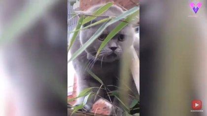 Un gato se escapa de casa, se queda atrapado en una valla, y comienza a emitir extraños sonidos
