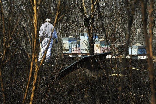 Un apicultor revisa y riega sus colmenas junto a una zona quemada por el incendio de Cualedro (Ourense) que sigue sin control desde su inicio el miércoles y que se ha convertido ya en el peor del año, arrasando 1.000 hectáreas, en Cualedro, Ourense, Galic