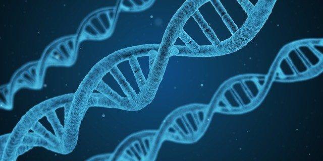 Una nueva investigación detalla el funcionamiento interno del genoma humano y de
