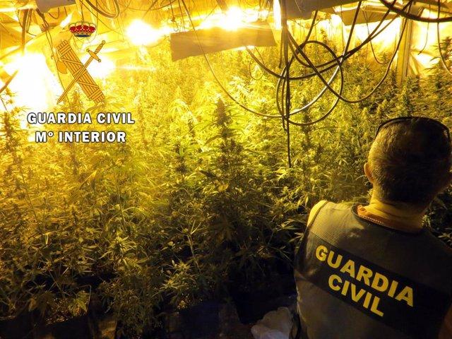 A prisión el responsable de un cultivo de 400 plantas de marihuana en un cortijo de Berja (Almería)
