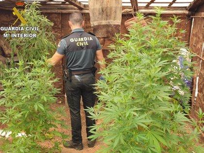 Liberadas ocho víctimas de trata a las que obligaban a cuidar y recolectar plantaciones de marihuana
