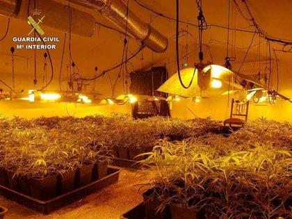 Tres detenidos y desmantelado un laboratorio de cultivo de marihuana en Valle de Mena