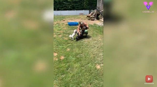 Esta pareja acondiciona su hogar para que 20 perros discapacitados puedan vivir