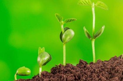 Mapfre cumple 14 años en el índice de sostenibilidad FTSE 4Good