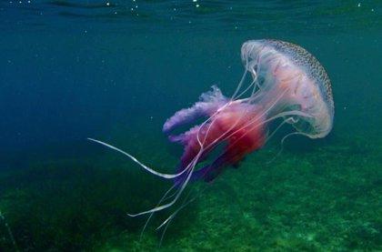 Claves contra la picadura de medusas