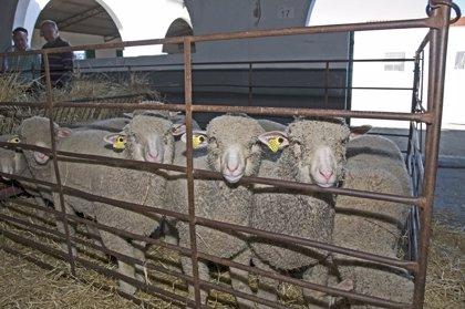 La Diputación de Cáceres abre el registro de interesado en adquisición de ganado de sus explotaciones