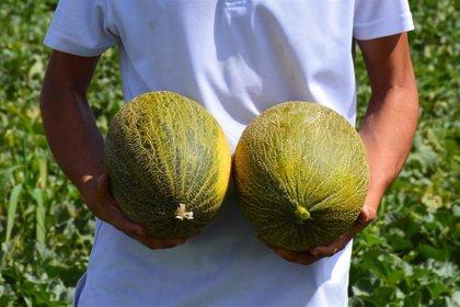 Nace buenmelon.com, una plataforma para pedir melones y sandías de La Mancha a domicilio