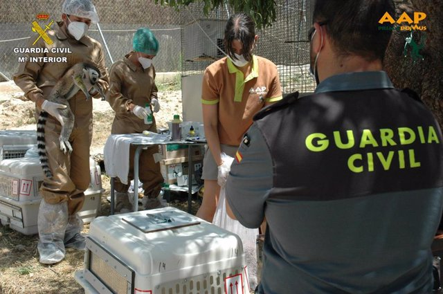 Opc Albacete. Nota De Prensa (Intervencion Especímenes Lemur)
