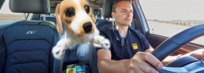 Pesca.- Más del 36% de los españoles viajan en coche con sus mascotas y la mayoría utiliza sistemas de seguridad para ellas
