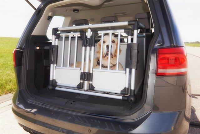 Imagen de un perro en el maletero de un vehículo.